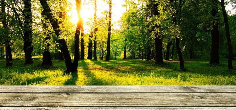 Pleje af træterrasse – sådan gør du bedst